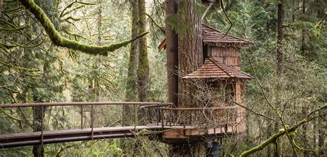 tree house treehouse point