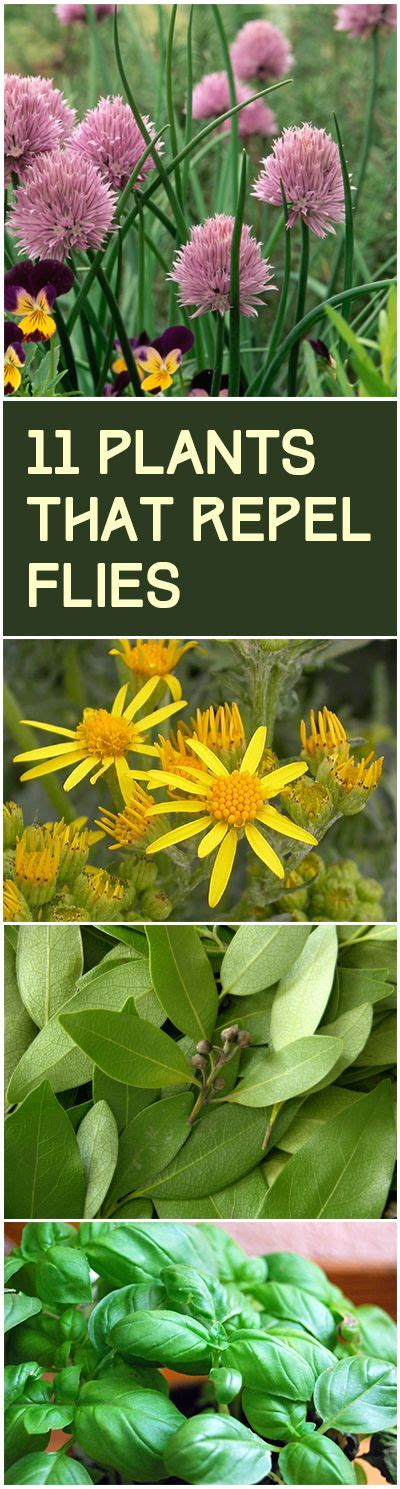 11 plants that repel flies gardens flies away and plants that repel flies