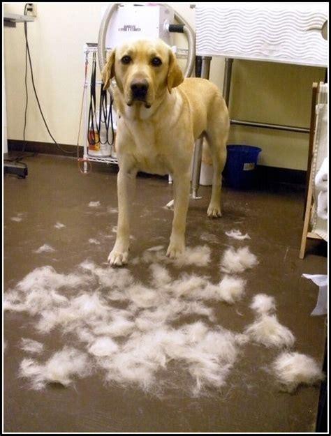 grooming denver grooming denver co pet photos gallery 0wkdjy63qd