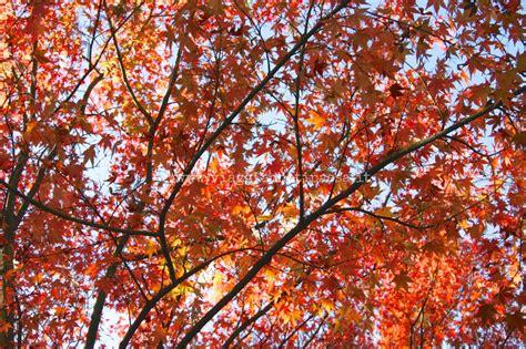 giardino di sissi itinerari d autunno con bambini giardini di sissi a merano