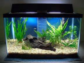 Decorating Ideas For Fish Tank Home Accessories Fish Tank Decoration Pictures With