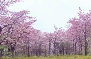 color palo de rosa palo de rosa flickr photo