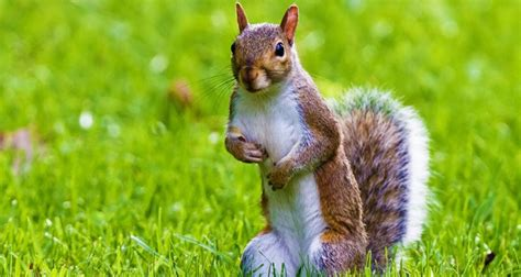 fun facts about squirrels the fact site