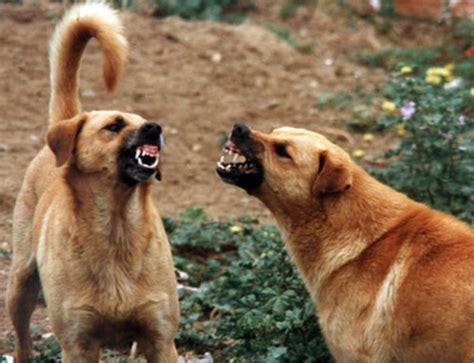 alimenti x cani zeamiche alimenti x cani gatti l affetto per un