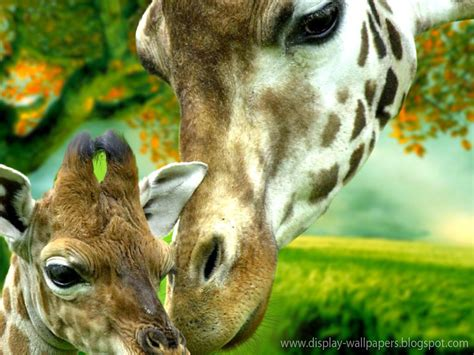 wallpaper for walls animal animation wall cute animals wallpaper download