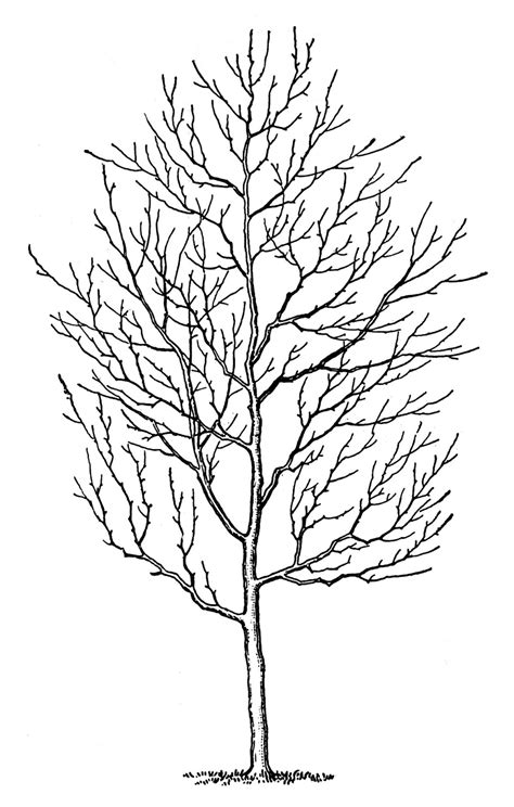 winter white tree vintage clip winter trees the graphics