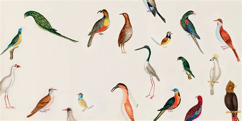 image gallery ornithology