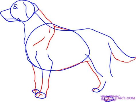 how to labrador in draw a labrador step by step drawing sheets added by july 6 2008 10 18 47 am