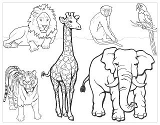 Preschool Zoo Coloring Pages Freecoloring4u Com Zoo Animal Coloring Pages For Preschool