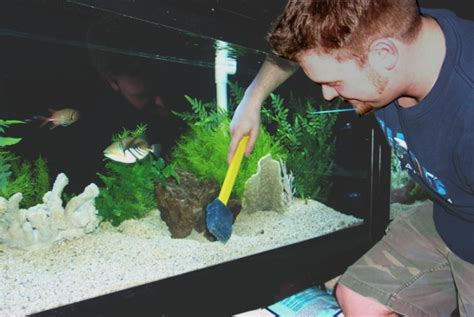 how to clean your fish tank properly general pets