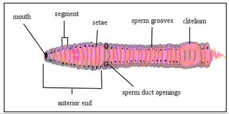 earthworm parts test ihmc cmaps 2