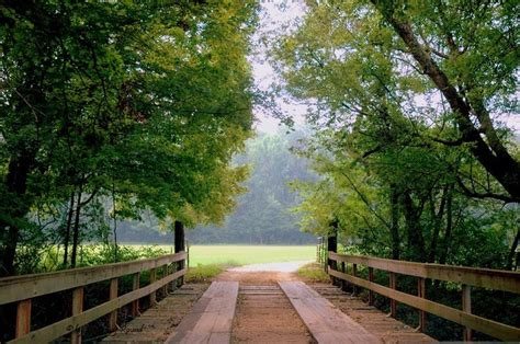 willows and path mural 32 best images about bridges on