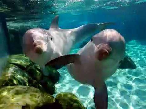 imagenes relajantes del mar m 250 sica de relajaci 243 n delfines y ballenas youtube
