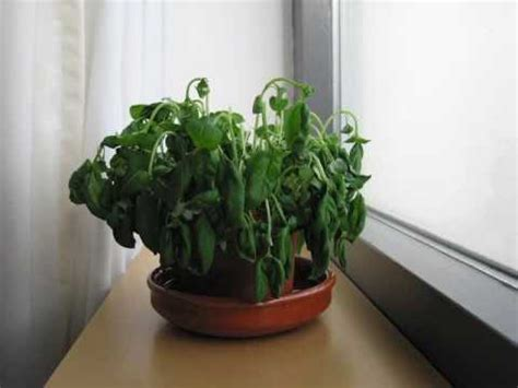 indoor plant dying how to take care of your indoor plant janewilson911 s