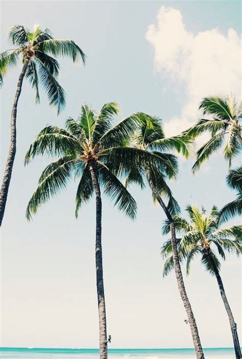 summer vibes palm trees hd 467 best images about palm trees on pinterest