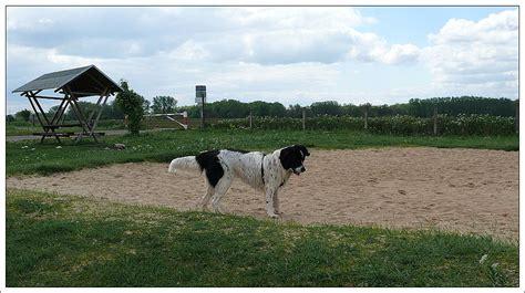 wann hund einschläfern landseer hund rettungshund landseerwelpen