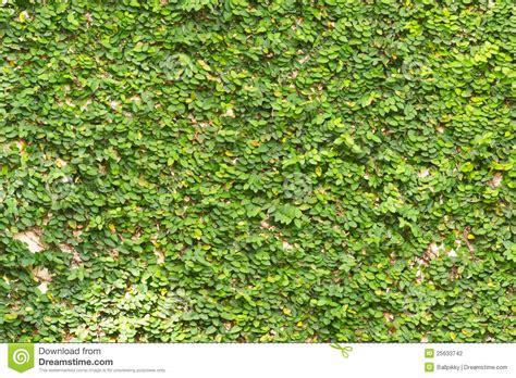 imagenes de paredes verdes paredes verdes foto de archivo imagen de escena outdoor