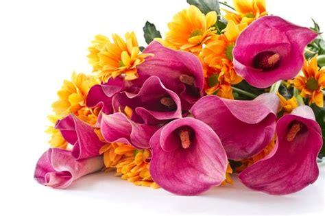 fiori regalo compleanno quali fiori regalare per i 18 anni lettera43 it