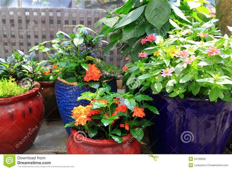 indoor flower gardening stock photo image 54700026