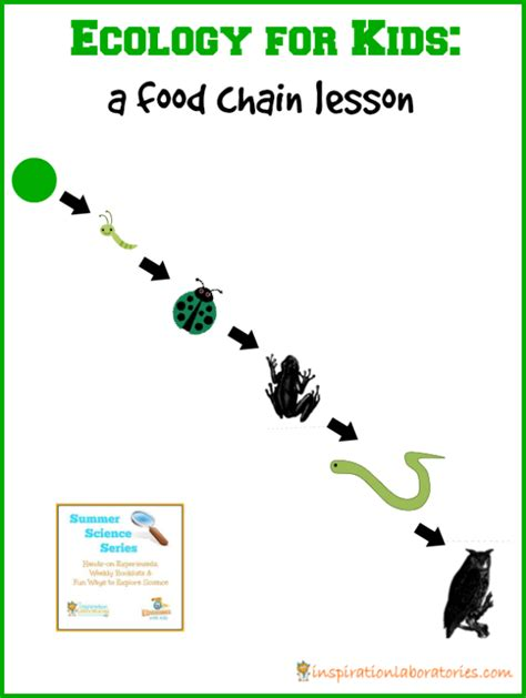 Backyard Food Chain by Ecology For Learning About Biomes Edventures With