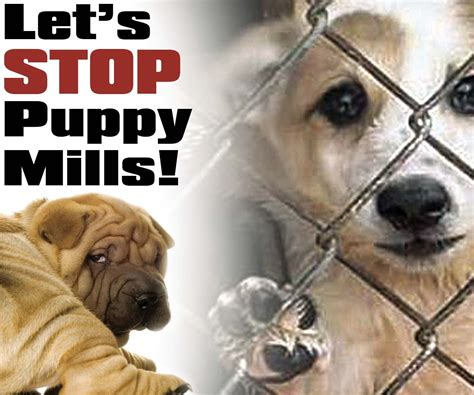 puppy stop petition stop puppy mills