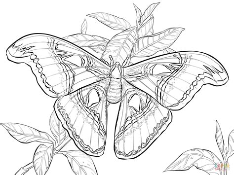 Realistic Coloring Pages realistic atlas moth coloring page free printable