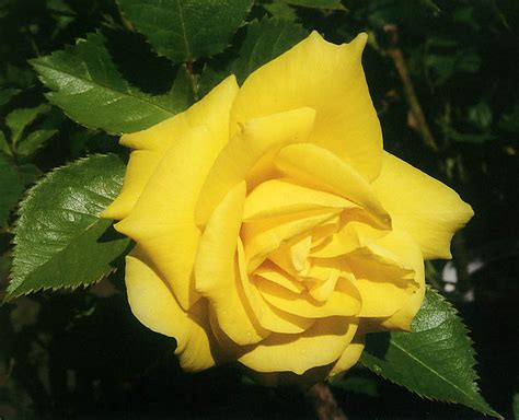 H Garden by Floribunda Roses