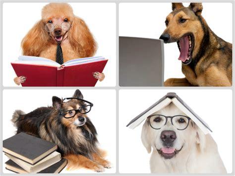 imagenes de burros inteligentes perro labrador