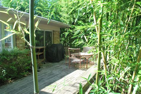 bamboo trees for backyard when neighbor s plants invade home garden daily