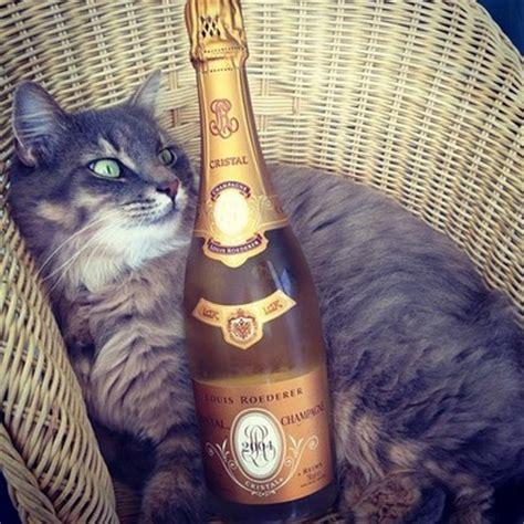 cat instagram of luxury rich cats on instagram 10 pics