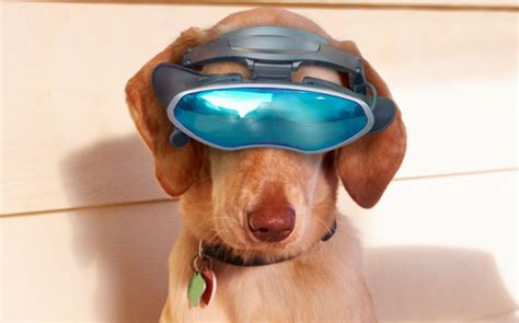 new technology for dogs dogs of the future how much technology has benefitted our