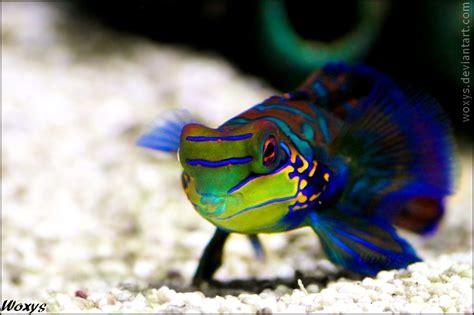 Berapa Lu Aquarium nescafe milo lu punya
