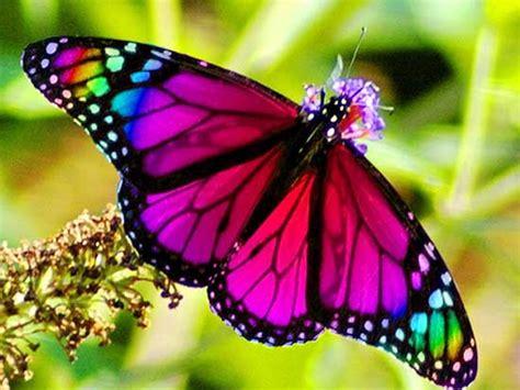imagenes de mariposas espirituales la simbolog 237 a esot 233 rica de la mariposa