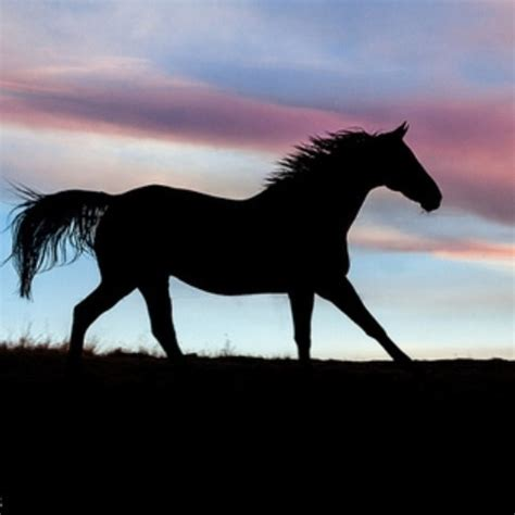 mustang horse silhouette 17 best images about paint night on pinterest oil pastel