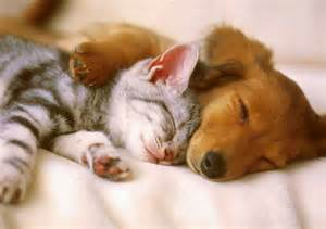 Cute cat dog sleeping with love cute cats love cute