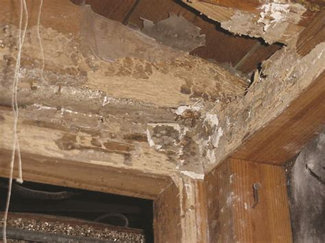 What Is Floor Plan Financing by Termite Ceiling Damage Termites In Ceilings
