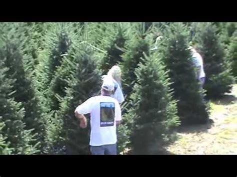 christmas tree farm happy valleyvadelaide a day at the tree farm in a day version