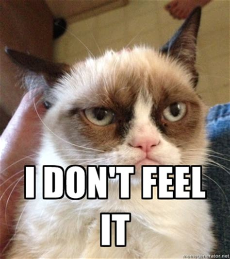 Funny Angry Cat Meme - internet meme grumpy cat to star in friskies adverts