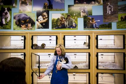pet store puppies for sale genesee valley pet store targeted for closing by animal groups petition