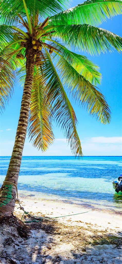 palmen strand boot meer blauer himmel tropisch