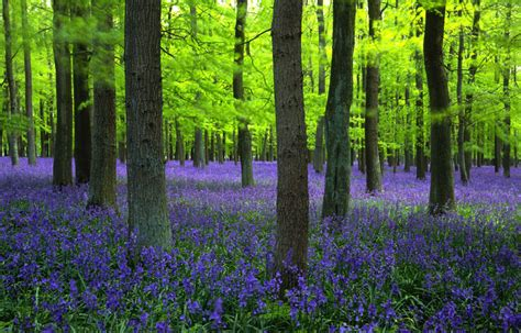 bluebell forest news from moor end