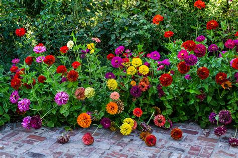 Zinnias Flower Garden Bridges Landscaping