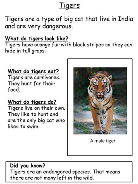 facts about the new year tiger year 3 literacy homework broad heath primary school
