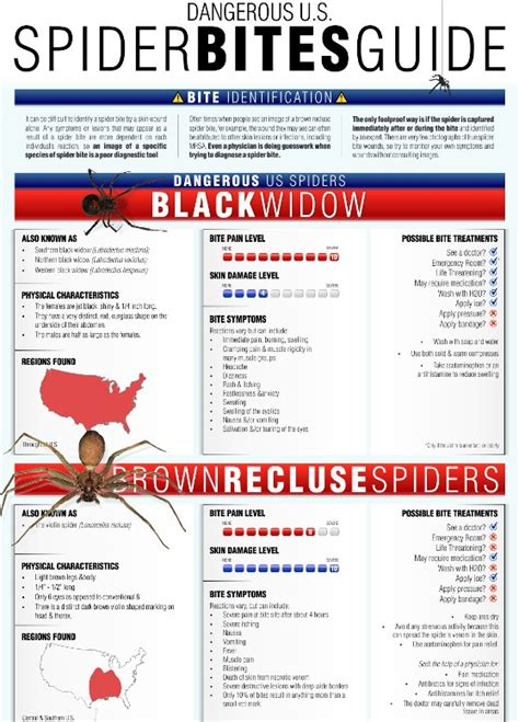 how do you a guide spider bites guide infographic