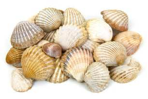 Shell And Sea Shells Free Stock Photo Domain Pictures