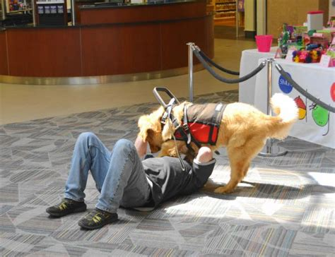seizure dogs 11 types of service dogs who make the lives of their humans beautiful indiatimes