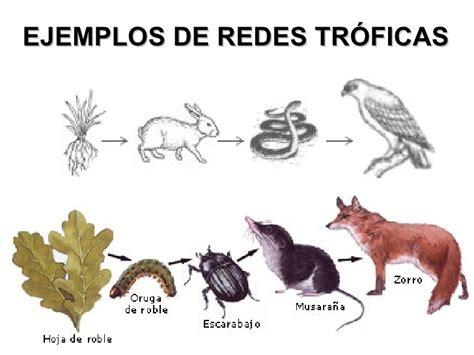 cadenas alimenticias ejemplos con dibujos circulacion del alimento en un ecosistema 6 186
