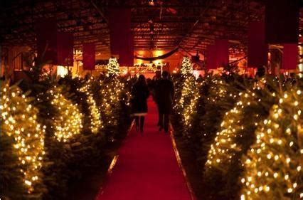2012 guide to bay area s christmas tree farms and lots