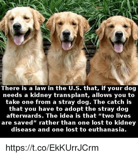 kidney failure when to euthanize 25 best memes about euthanasia euthanasia memes