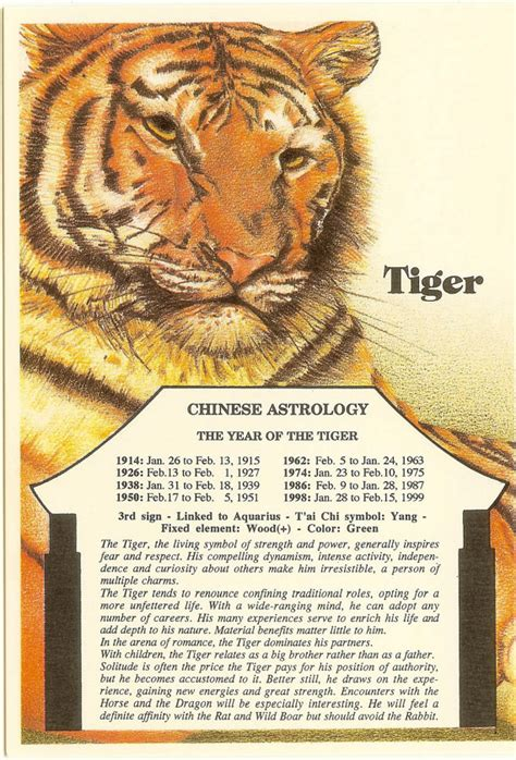 best 25 tiger zodiac ideas on pinterest tiger chinese